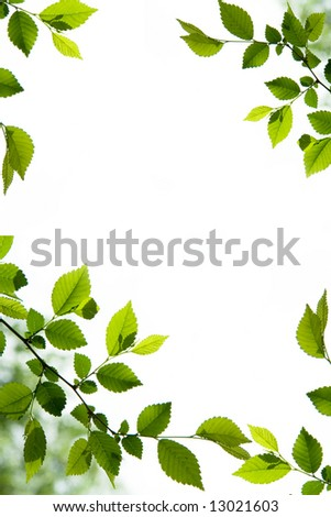 Foliage frame with green leaves - stock photo