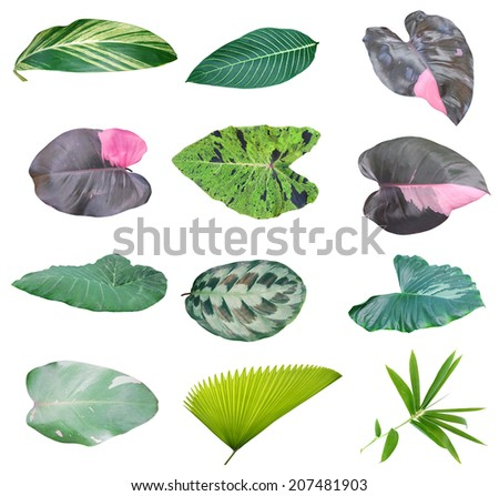 Foliage, houseplant leaves collection - stock photo