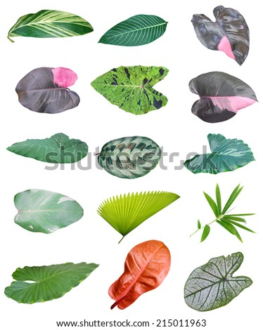 Foliage isolated, houseplant leaves  - stock photo