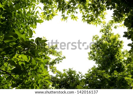 Foliage isolated on white - stock photo