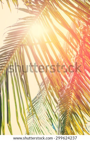 Foliage of Coconut palm tree with Retro Filtered, as Background for Travel Holiday Cards. With Sun across Leaves - stock photo