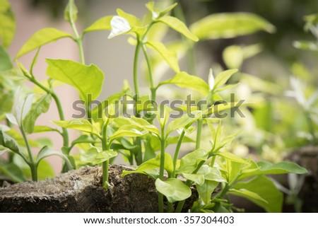 Foliage  spring - stock photo
