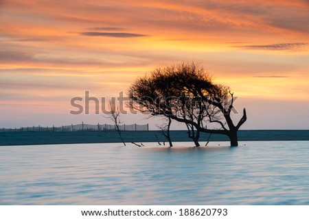 Folly Beach Charleston South Carolina Lone Tree Sunrise - stock photo
