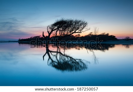 Folly Beach County Park Charleston South Carolina Lone Tree Reflecting at Sunset - stock photo
