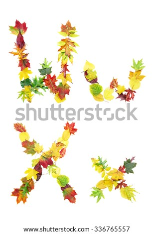 Font made of autumn leaves isolated on white. Letters w and x. - stock photo