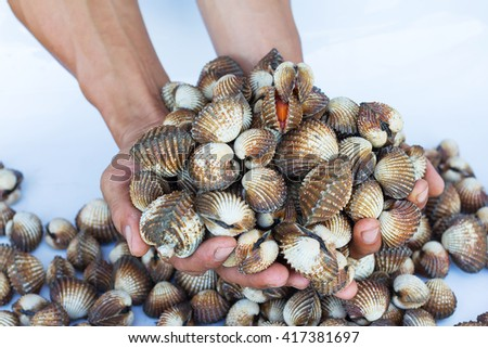 Food marketing / heap of cockles in palm/prepared shellfish/fresh and tasty seafood  - stock photo