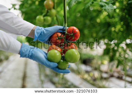 Food scientist showing tomatoes in a greenhouse - stock photo