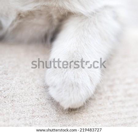 foot kitten. macro - stock photo