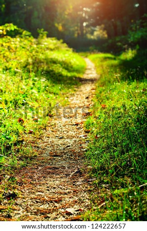 Foot path in the forest - stock photo