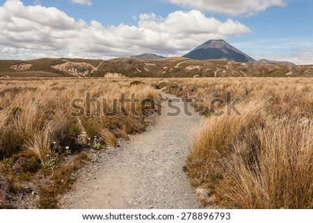 footpath across grassland in Tongariro National Park in New Zealand - stock photo
