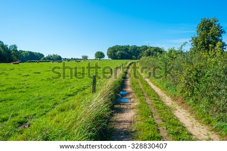 Footpath along a meadow in summer - stock photo