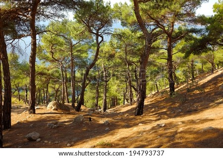 Footpath going through a forest - stock photo