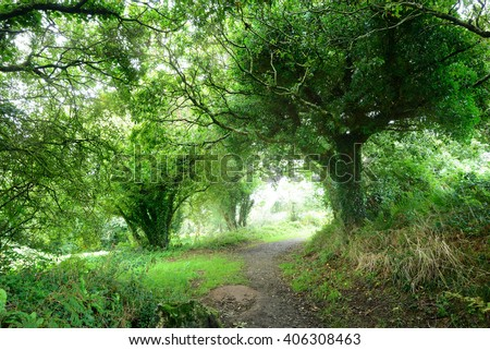 Footpath in a green oak tree tunnel in Brittany, France - stock photo