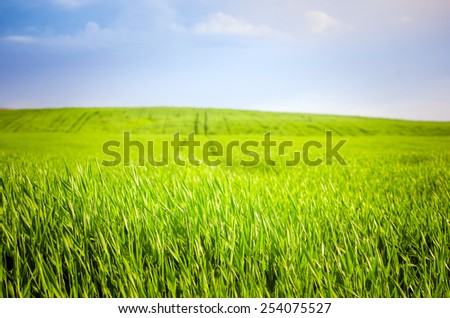 footpath in a green wheat field - stock photo