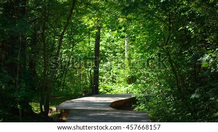 Footpath in a mixed forest - stock photo