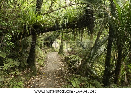 footpath in rainforest in Waitakere Ranges, New Zealand - stock photo