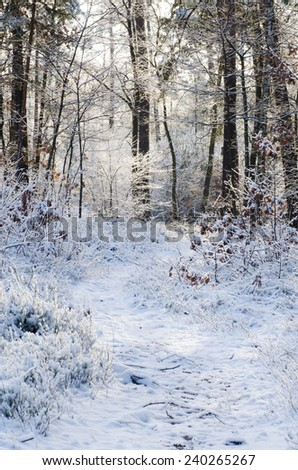 footpath in snowy winter forest - stock photo