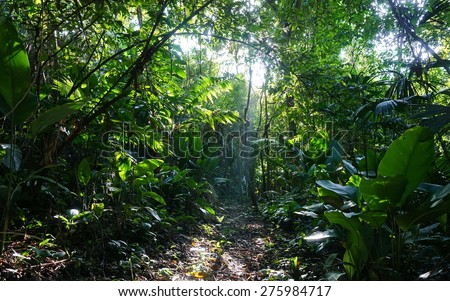 Footpath in the jungle of Costa Rica with sunlight through lush foliage, natural scene, Manzanillo, Caribbean - stock photo