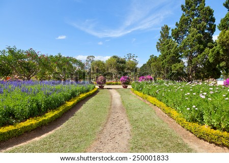 footpath in the lush spring garden - stock photo