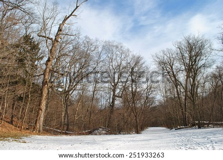 Footpath in Winter Forest - stock photo
