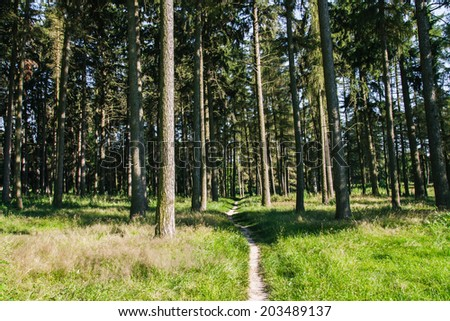 footpath leading through the forest - stock photo