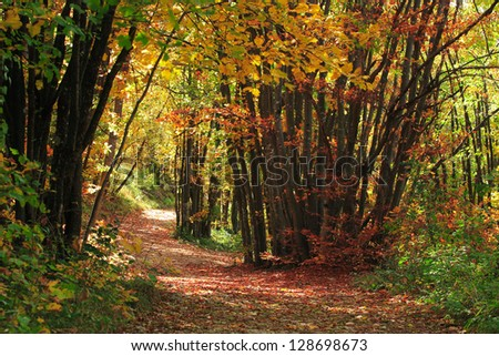 Footpath through a beautiful forest - stock photo