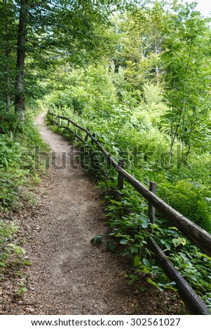Footpath Through a Forest In Summer Time - stock photo