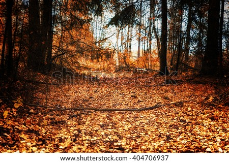 Footpath through autumn forest, land covered with golden leaves - stock photo