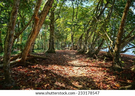 Footpath under tropical trees along the coast, Caribbean, Puerto Viejo, Costa Rica - stock photo