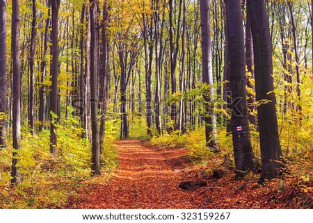 Footpath winding through colorful forest in Hungary - stock photo