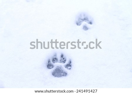 footprint dog in the snow - stock photo