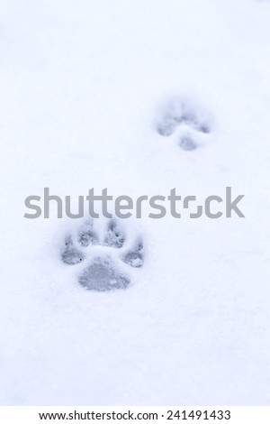 footprint pet in the snow - stock photo