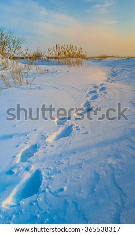 Footprints in deep snow - stock photo