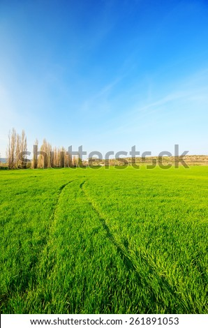 Footprints in the green field of wheat into the distance. natural composition - stock photo
