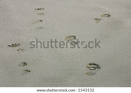 Footprints on sand, Kalaloch Beach, Olympic Peninsula, Washington - stock photo