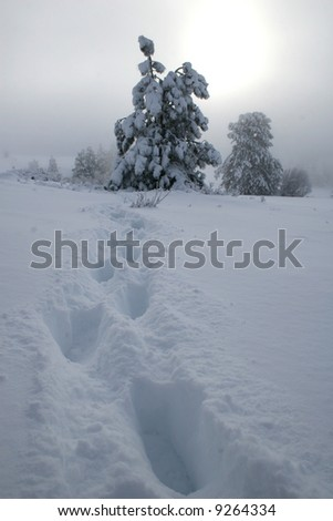 footsteps through a blizzard - stock photo