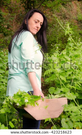 foraging for wild food. Portrait of a woman in woodland holding a wooden crate full of garlic mustard, Alliaria petiolata herb.  - stock photo