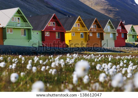 Foreground of arctic flowers and a row of very colorful homes in Longyearbyen, Svalbard, Norway. - stock photo