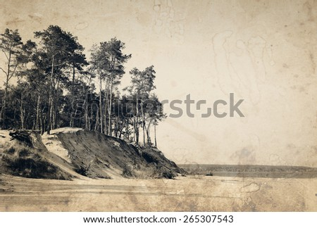 Forest above sand beach in summer. Old photo effect was applied. - stock photo