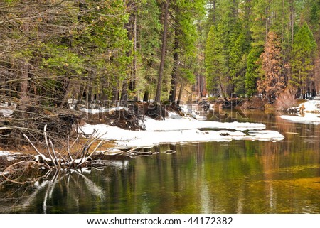 Forest along the Merced River in Yosemite National Park, California. - stock photo