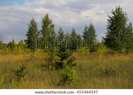 forest and steppe in nature - stock photo