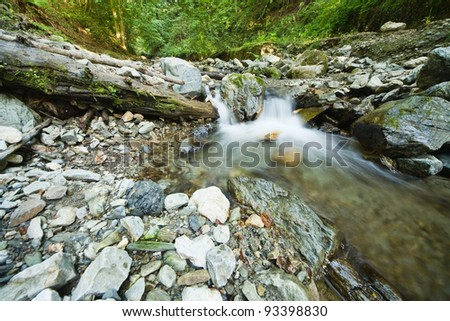 forest and stream - stock photo