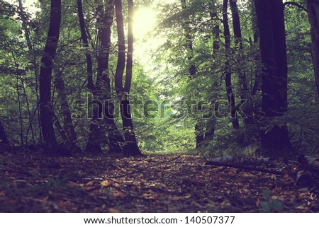 forest and trees vintage at sunrise - stock photo