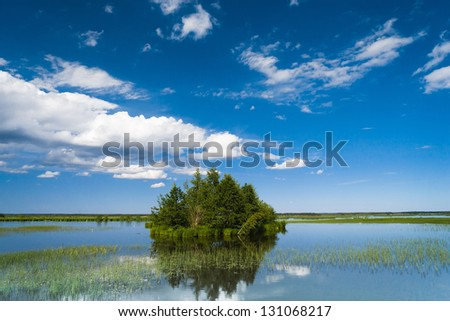 Forest Around Flood Waters - stock photo
