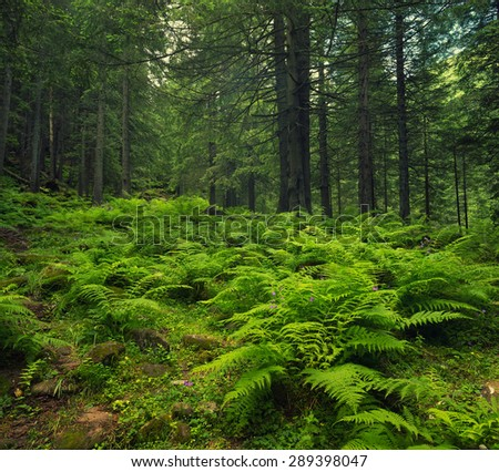 Forest as a background in summer time. Natural summer composition - stock photo