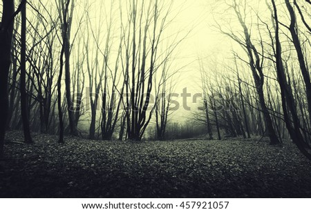 forest at sunset - stock photo