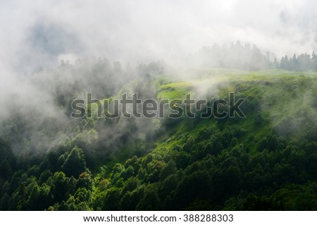 Forest. Beautiful mountain forest landscape, Dramatic forest, forest in clouds, Beautiful forest, forest on slope of mountain, forest in haze, forest in fog, natural forest, live forest? Sochi, Russia - stock photo