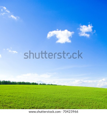 Forest Beauty Background - stock photo