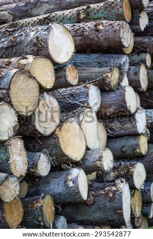 Forest Clearance - stock photo