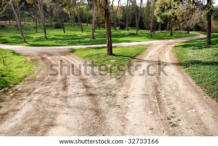 Forest crossroads - stock photo